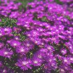 Jenis dan Fungsi Bunga Papan